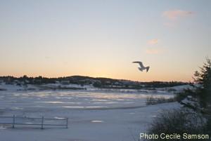 Photo of the Week: February sunrise