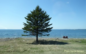 Cape Breton Living's Photo of the Week: Irish Vale