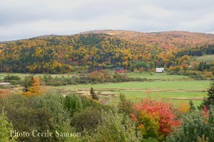 Cape Breton Living Photo of the Week: Margaree fall road trip