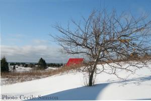 Cape Breton Living Photo of the Week: L'Ardoise winter scene