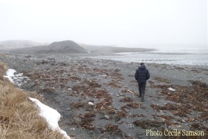 Cape Breton Living Photo of the Week: L'Ardoise - A winter walk