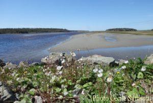 Cape Breton Living Photo of the Week: Fourchu low tide