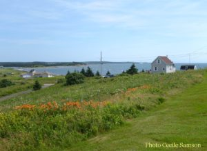 Cape breton Living Photo of the Week: Day Lilies L'Ardoise