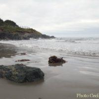 cape-breton-photo-weeksept3016