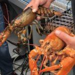 St Peter's Lobsterfest - Photo Jim Lucas