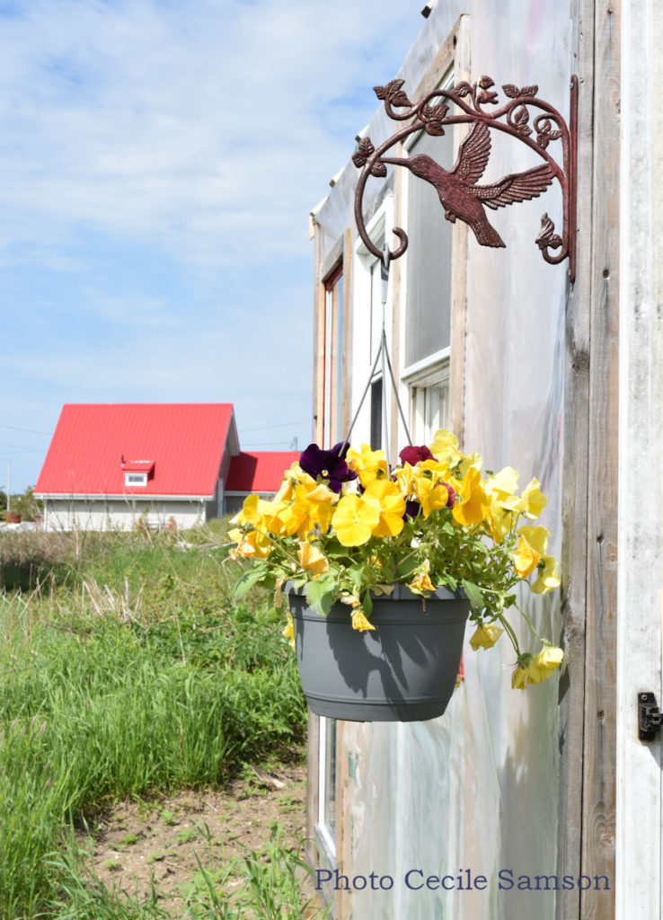 Cape Breton Photo of the Week: Little Greenhouse - L'Ardoise