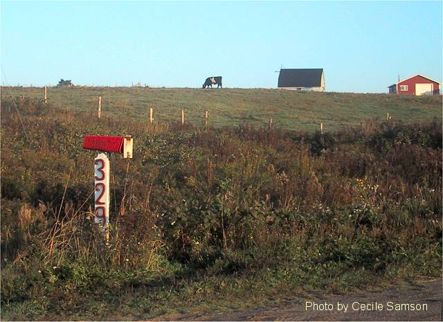 Cape Breton Living Photo of the Week Memories: Cows on the Hill - Chapel Cove Rd L'Ardoise