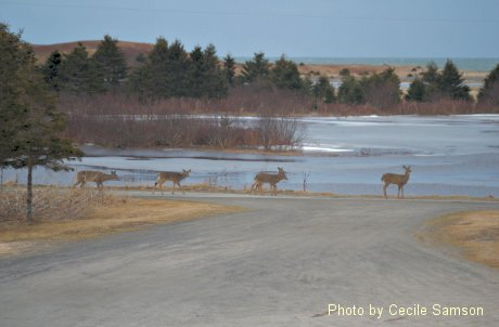 Chapel Cove Rd, L'Ardoise - A past Cape Breton Living Photo of the Week from March 5, 2010
