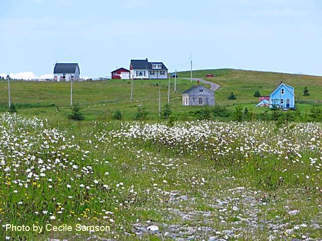 Cape Breton Photo Memories: Chapel Cove Rd 2006. A pretty summer scene in L'Ardoise.