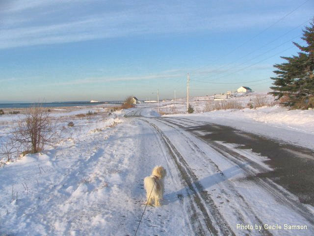 "Cape Breton Living Photo Memories: Walk on Chapel Cove Rd 2005 L'Ardoise - Chapel Cove Rd 2005 - ""The color of springtime is in the flowers; the color of winter is in the imagination."" - Terri Guillemets"