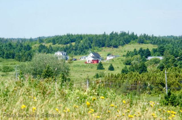 """Cape Breton Living Photo Memories: L'Ardoise 2010 """"A man without any history is like a tree without roots."""" - Malcolm X"""